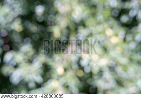 Abstract Defocused Background. Blurred Natural Landscape. Cover For Design