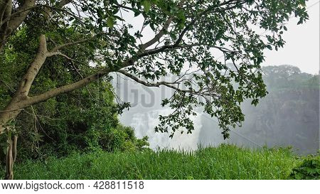 The Tree Bent Its Branches Over A Lush Green Lawn. In The Background, In The Fog, You Can See The Fl