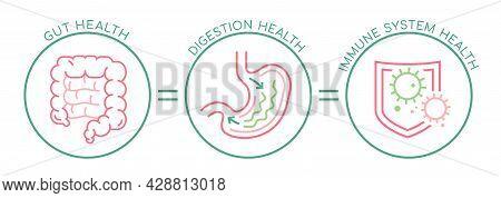 Gut - Digestion - Immune System Health Landscape Poster.