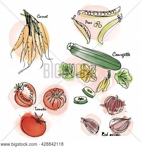 Watercolor Effect Vegetable Vector Icon Set. Digital Painting And Hand-drawn Monoline Elements. Vect