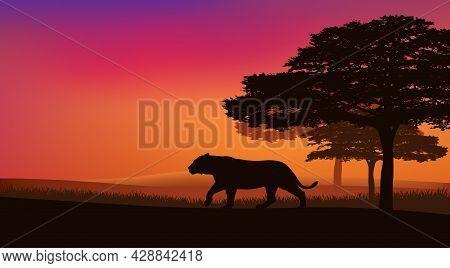 Wild Lioness Walking Over African National Park Savannah At Sunset - Evening Landscape Vector Silhou