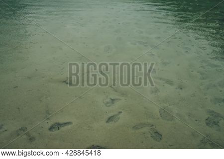Atmospheric Nature Background With Many Footprints On Green Sandy Bottom In Clear Water Of Lake With