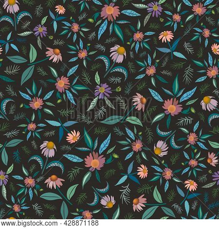 Coneflower Field Herbal Medicine And Aromatherapy Concept. Flowers With Leaves And Evergreen Twigs I