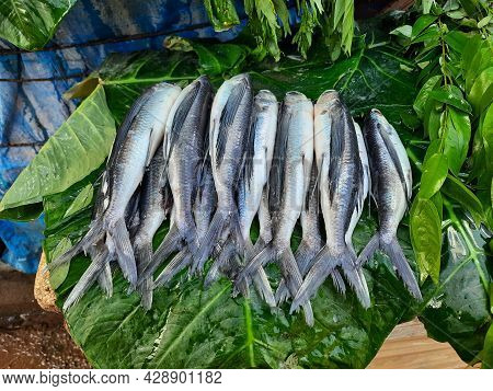 Beautiful Indian Local Silver Color Thin And Long Fish Selling On Roadside For Non Veg Food