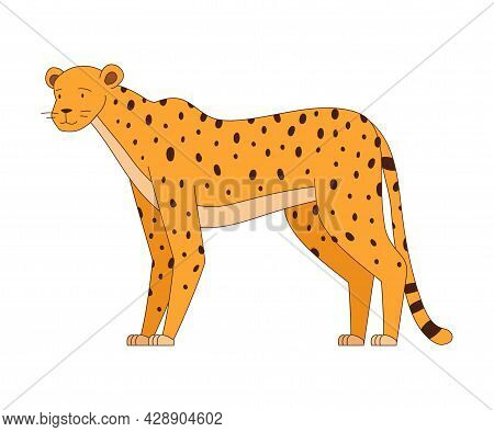 Spotted Cheetah Standing As African Animal Vector Illustration