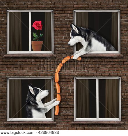 A Dog Husky Is Leaning Out Of The Window And Giving Sausages To His Neighbor Of The Their House.