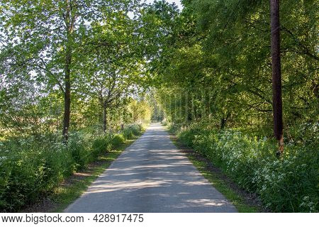 Country Road Uk. Tree-lined Lane In The English Countryside. Green Tree Foliage And Wild Flowers Lin