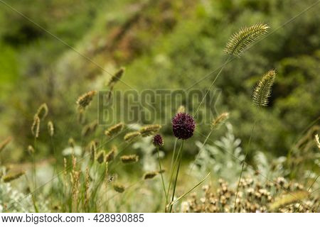 Blurred Background With Delicate Wildflower And Grass. Beautiful Natural Pattern Of Green Stems. Sel