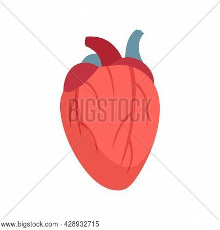 Human Heart Icon. Flat Illustration Of Human Heart Vector Icon Isolated On White Background
