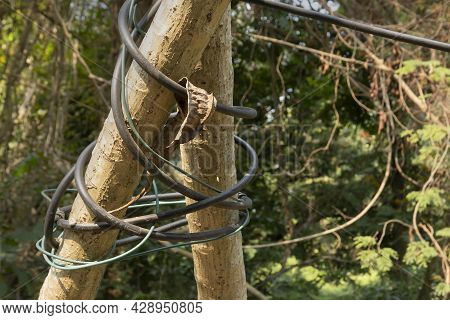 Tree Trunk Bound With Electric Cables And Wires. Symbolic Image Of Destruction Of Nature By Civilize