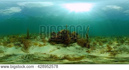 Tropical Fishes And Coral Reef At Diving. Underwater World With Corals And Tropical Fishes. Philippi