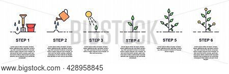 Growing Plant Stages Concept. Seeds, Watering Step, Sprout And Flower, Grown Plant. House Or Outdor