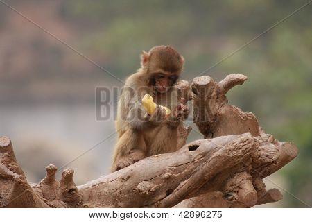 Monkey-wtf