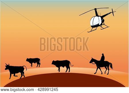 Mustering Cows With Horse And Helicopter Outback Australia