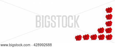 Red Rose Flower On A White Background.