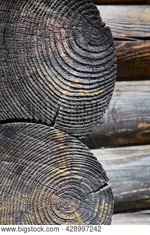 Charred Vintage Wood Burnt Log Stump Cut. Selective Focus Burnt Resinous Wood Glowing Texture Of Rou