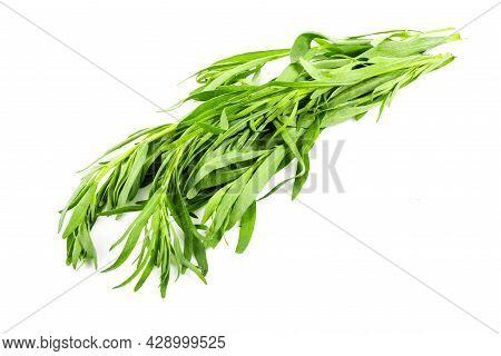 Fresh Tarragon Grass Herb Isolated On White Background. Macro Photo.