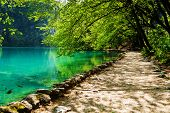 Path near a forest lake with fish in Plitvice Lakes National Park Croatia poster