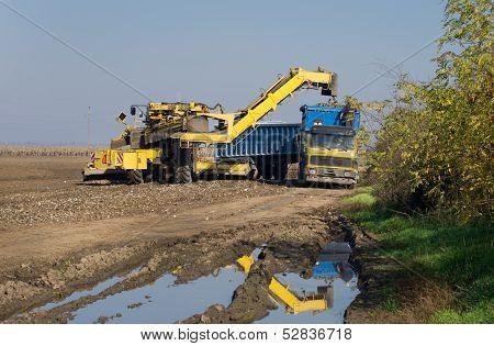 Sugar beet loading process