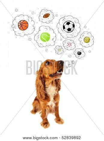Cute cocker spaniel thinking about balls in thought bubbles above her head poster
