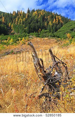 Autumn Forest At Ziarska Dolina - Valley In High Tatras, Slovakia