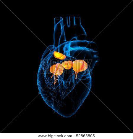 3d render Heart valve - side .