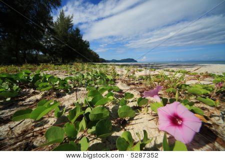Blume Strand