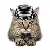 cat in a hat and tie butterfly isolated on white background poster