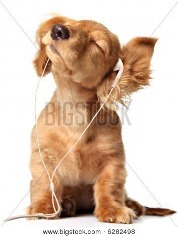 Musical Puppy