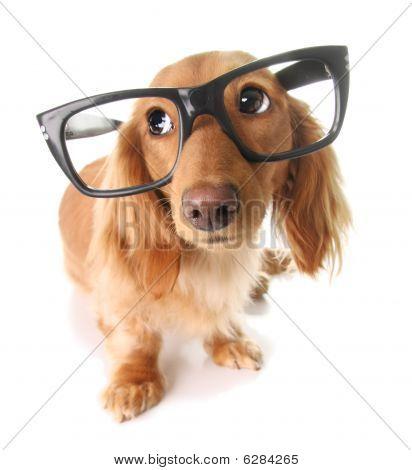 Smart Puppy