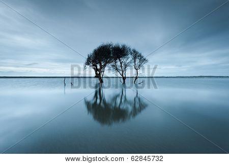 Lone Tree Folly Beach Charleston South Carolina