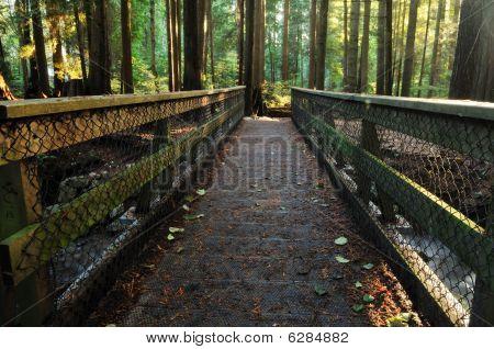 Wood Bridge In Lynn Valley Forest