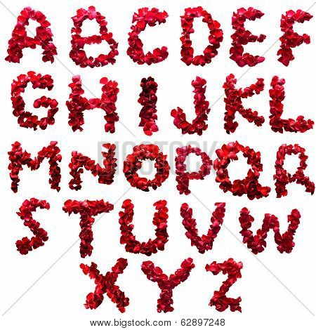 Alphabet Letter A - Z Made From Red Petals Rose Isolated On A White Background