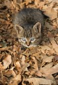 Sweet kitten sitting on yellow leaves, view from above poster