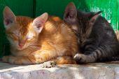 Kittens sleeping on a ledge on Kefalonia Island, Greece poster