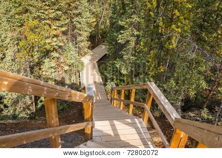 Canadian Forest Trail