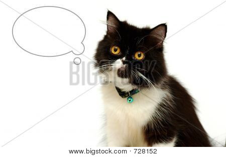 poster of Cat with blank bubble for text or copy