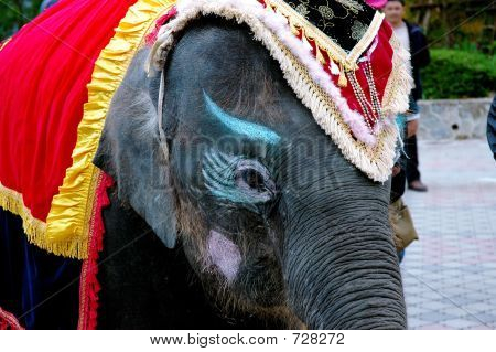 clown elephant