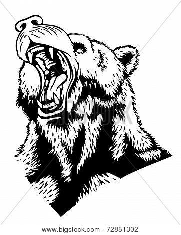 Head Of The Bear