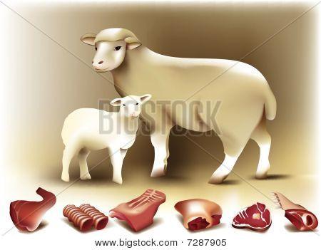 Sheep, lamb & mutton