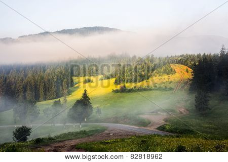 Mountain Forest In Morning Fog