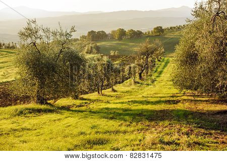 Toscany landscape in Italy