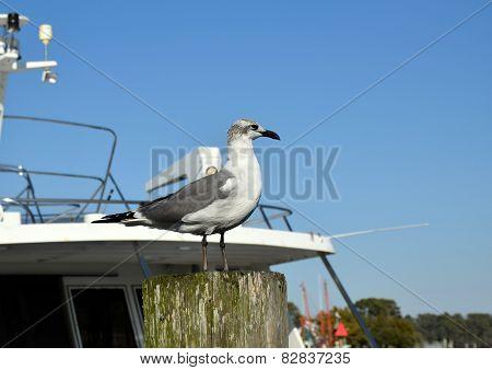 Sea Gulls doing what Gulls Do.