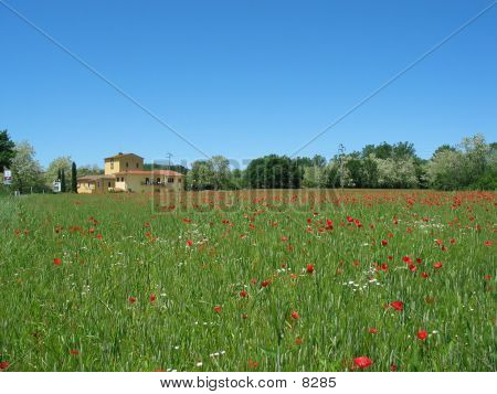 House With Poppys