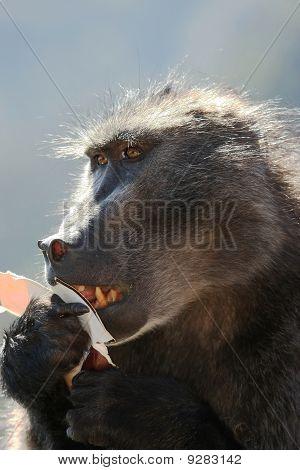 Baboon Fast Food