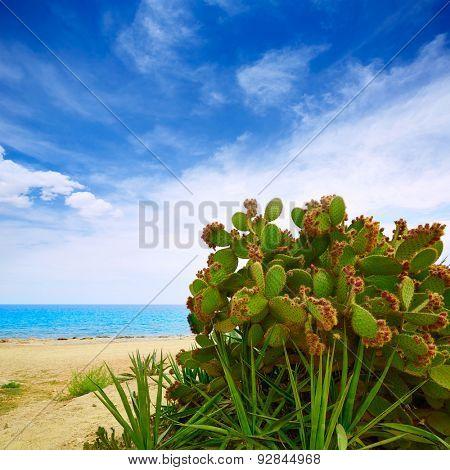 Almeria Mojacar beach prickly pear plant in Mediterranean sea Spain poster