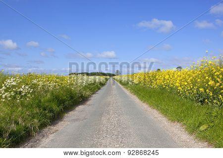 Rural Road Through Farmland