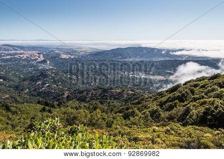Marin County Landscape