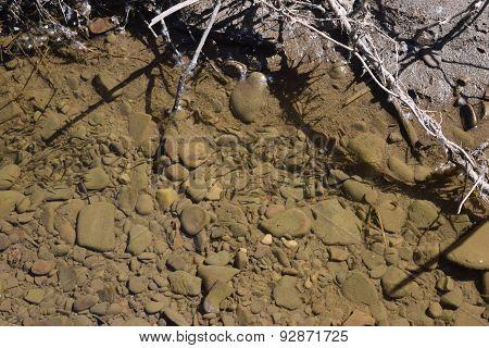 minnows in a stream