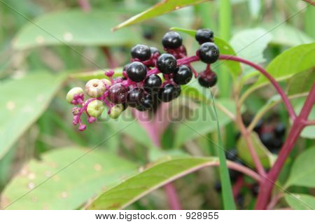 Autumn Berries...
